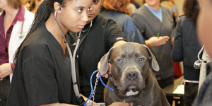 Veterinary Medicine Programs Available at HBCUs